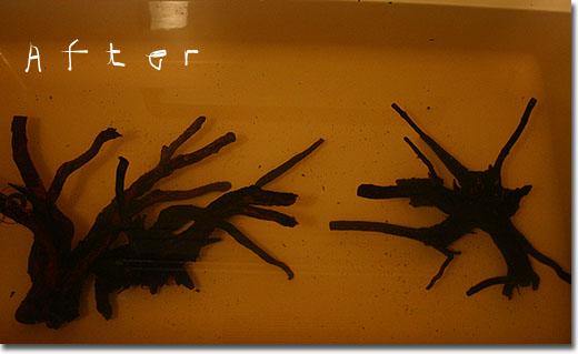 http://www.aquamindlaboratory.com/am2/am2picture2/75-3_061105.jpg
